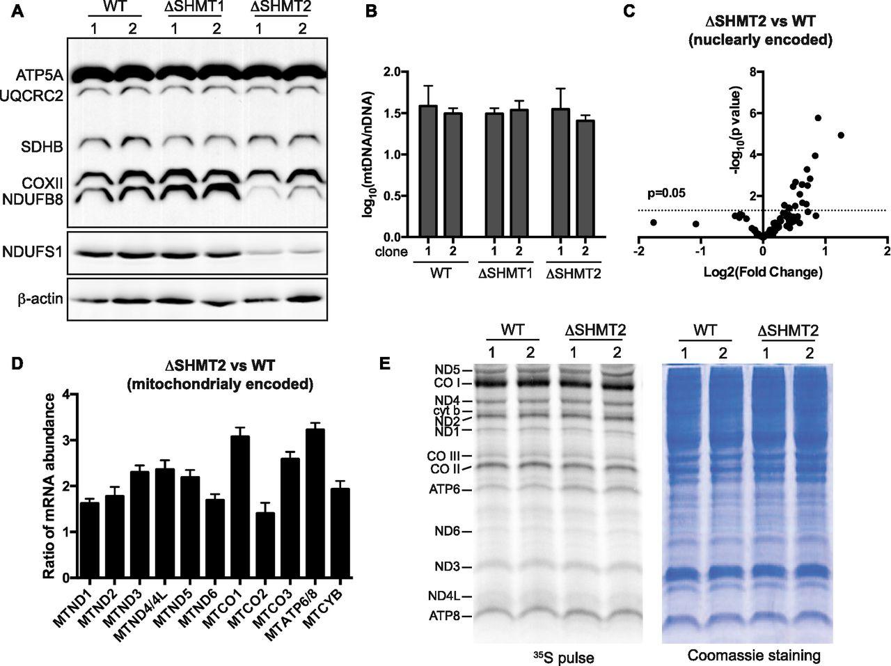 Serine catabolism is essential to maintain mitochondrial