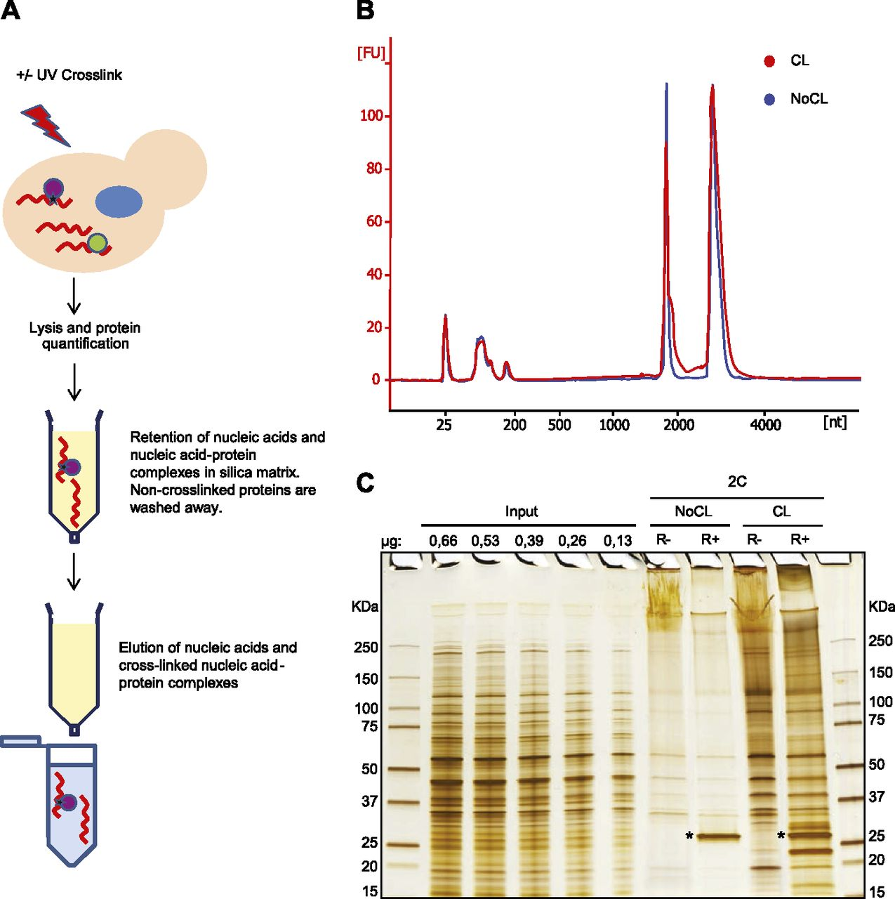 Silica-based solid-phase extraction of cross-linked nucleic acid
