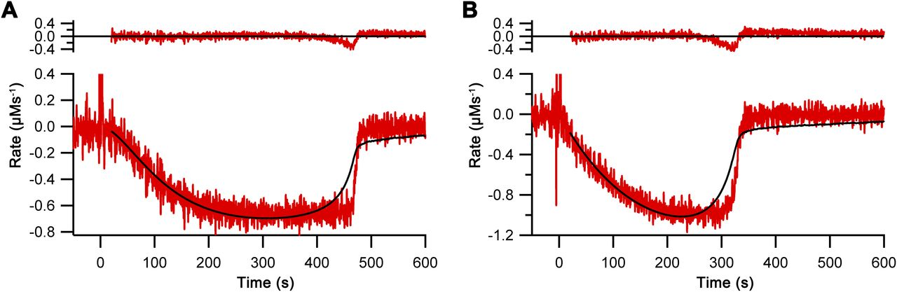 Molecular analysis of human Ero1 reveals novel regulatory mechanisms