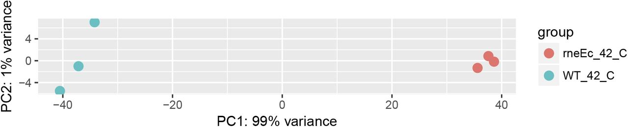 RNase E cleavage shapes the transcriptome of Rhodobacter sphaeroides