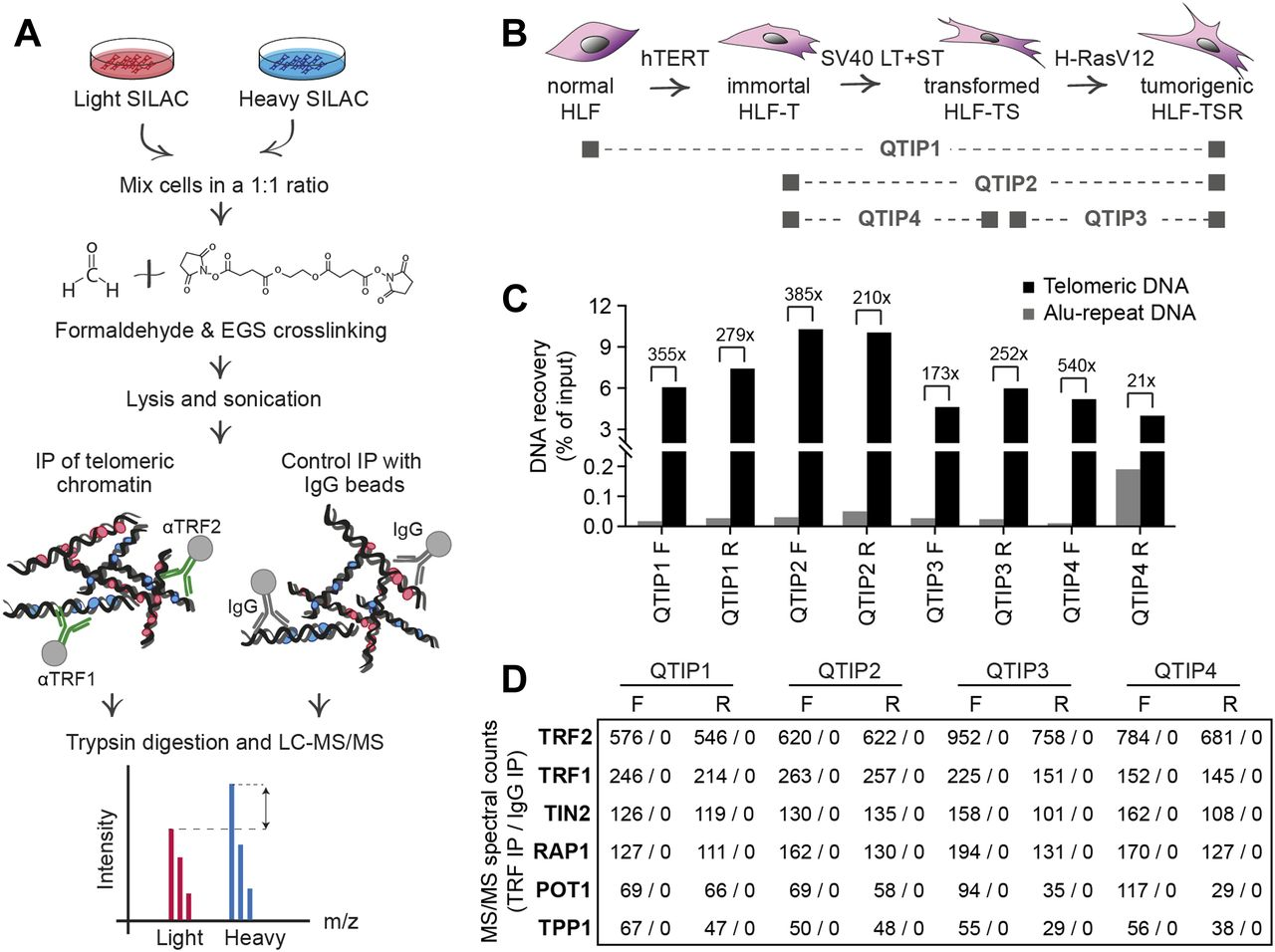 Transformation-induced stress at telomeres is counteracted through