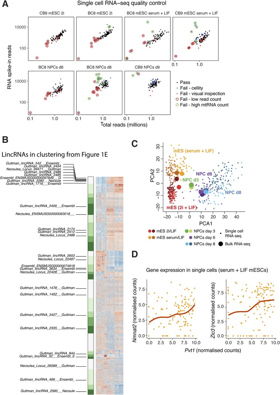 Distinctive features of lincRNA gene expression suggest widespread