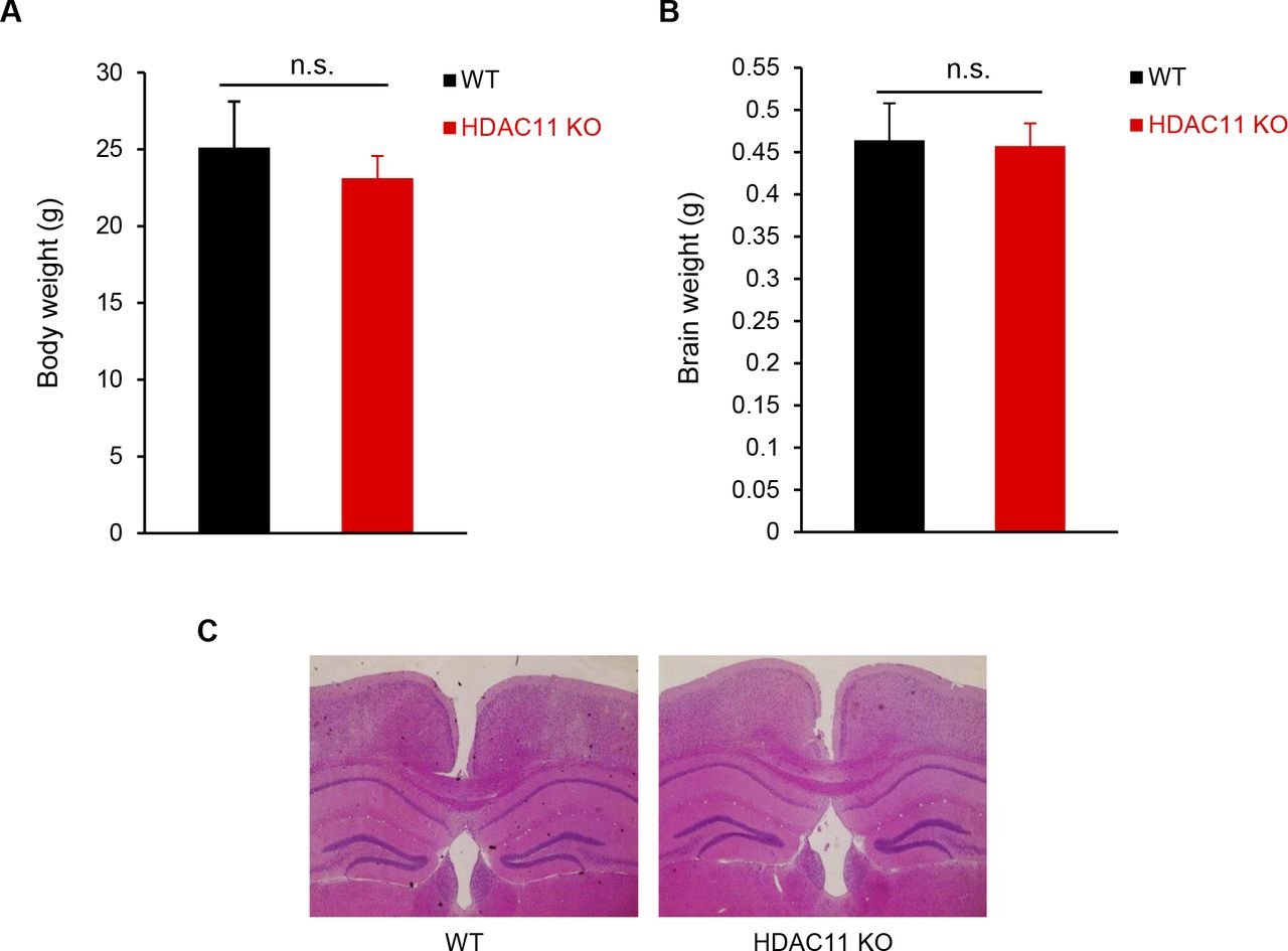 Loss of HDAC11 ameliorates clinical symptoms in a multiple sclerosis ...