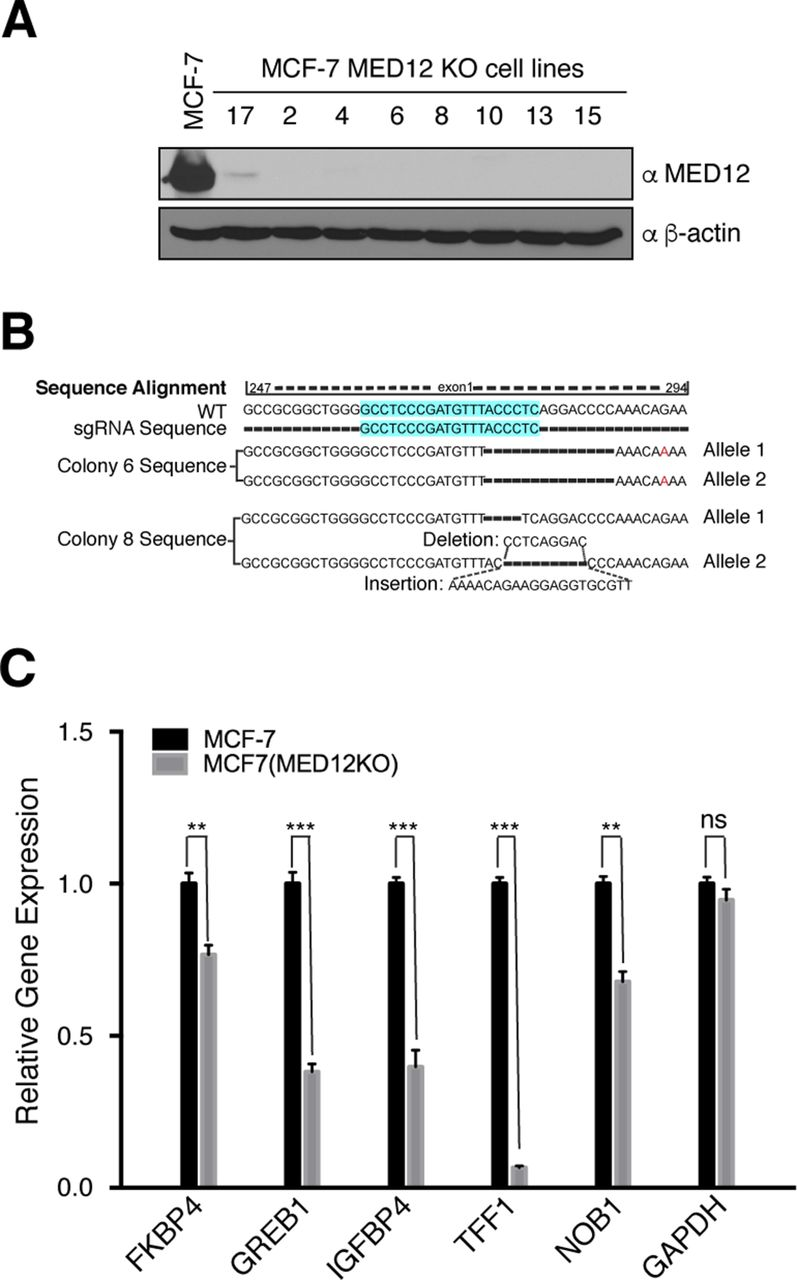 CARM1 methylates MED12 to regulate its RNA-binding ability