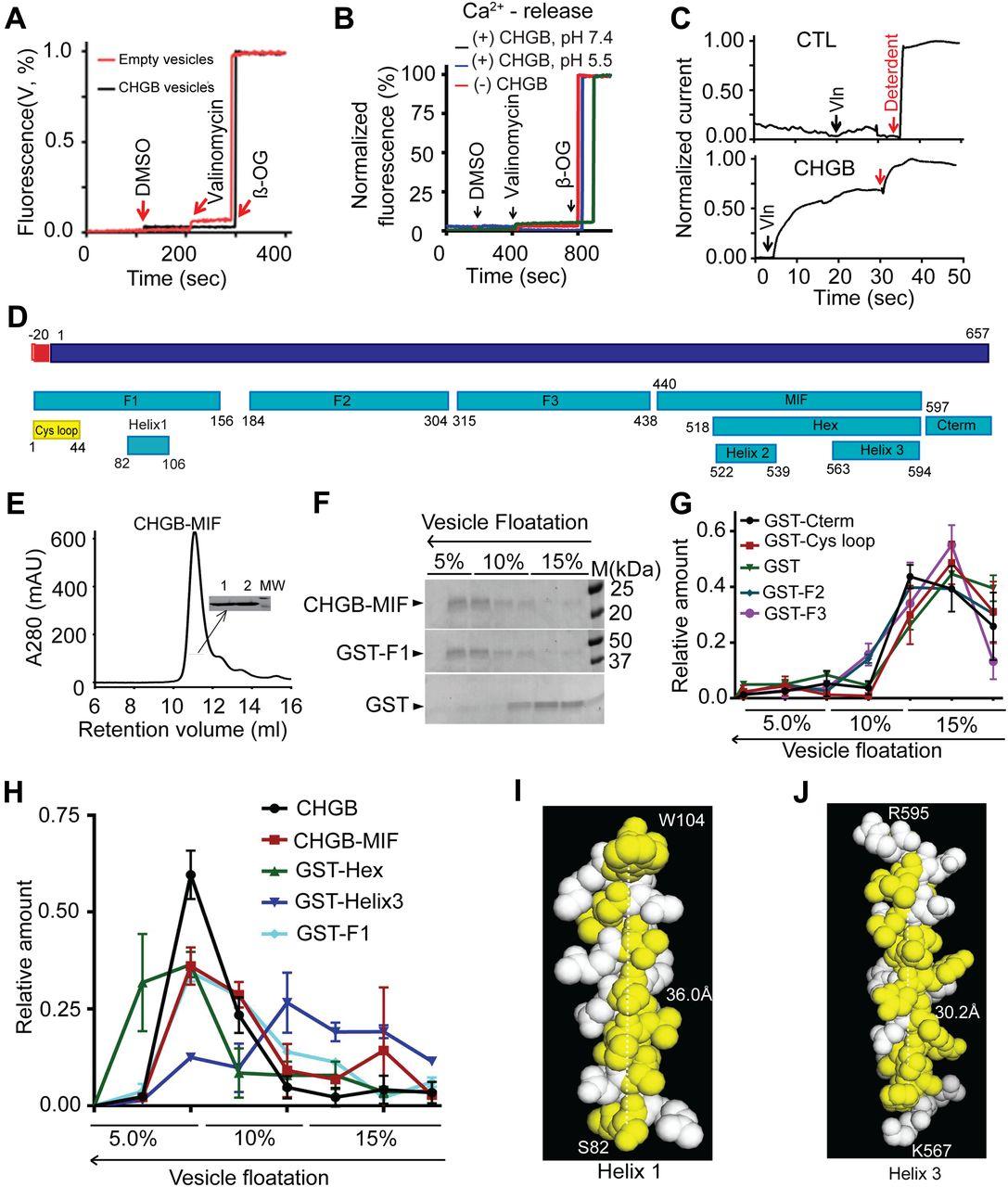 Secretory Granule Protein Chromogranin B Chgb Forms An Anion Thermo King Erc Tc Unit Wiring Schematic Diagram Manual Download Figure
