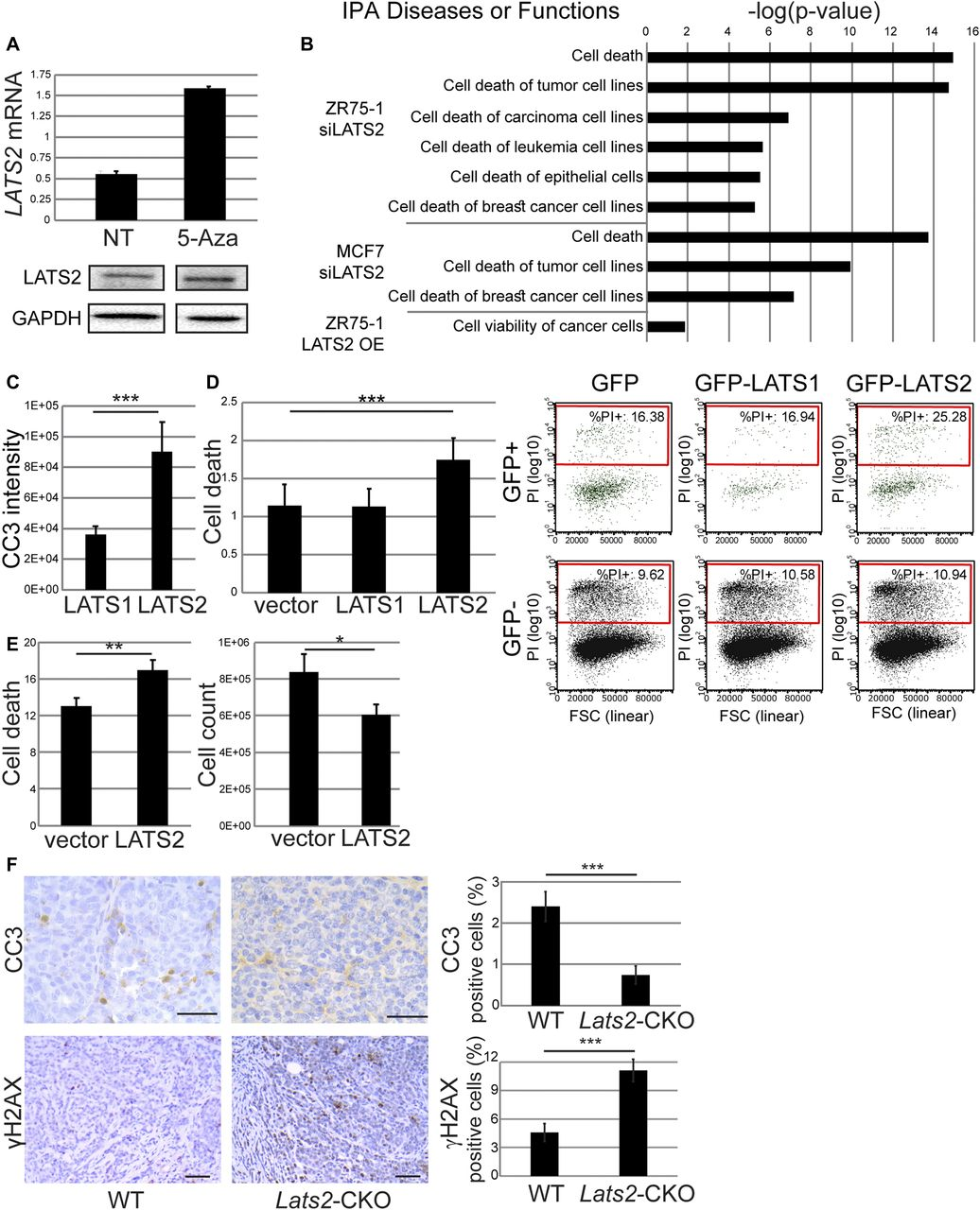 LATS1 and LATS2 suppress breast cancer progression by