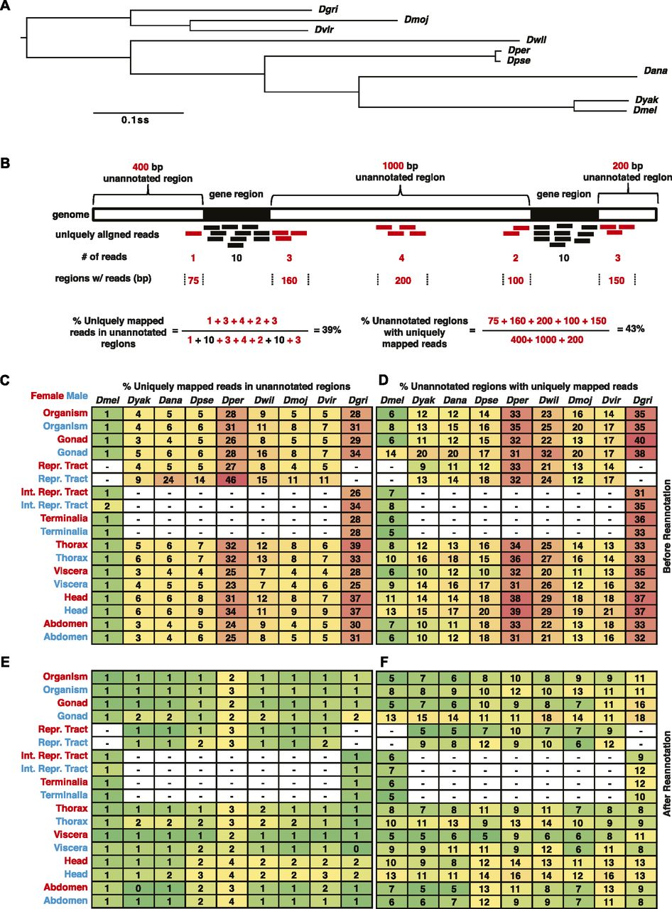 Re-annotation of eight Drosophila genomes | Life Science Alliance