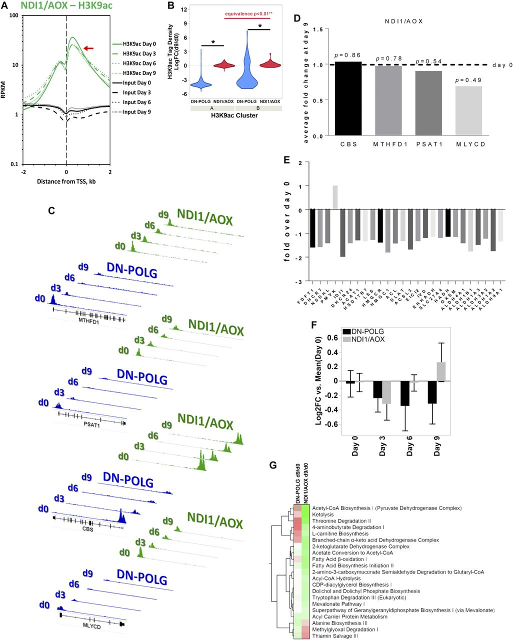 Mitochondrial acetyl-CoA reversibly regulates locus-specific