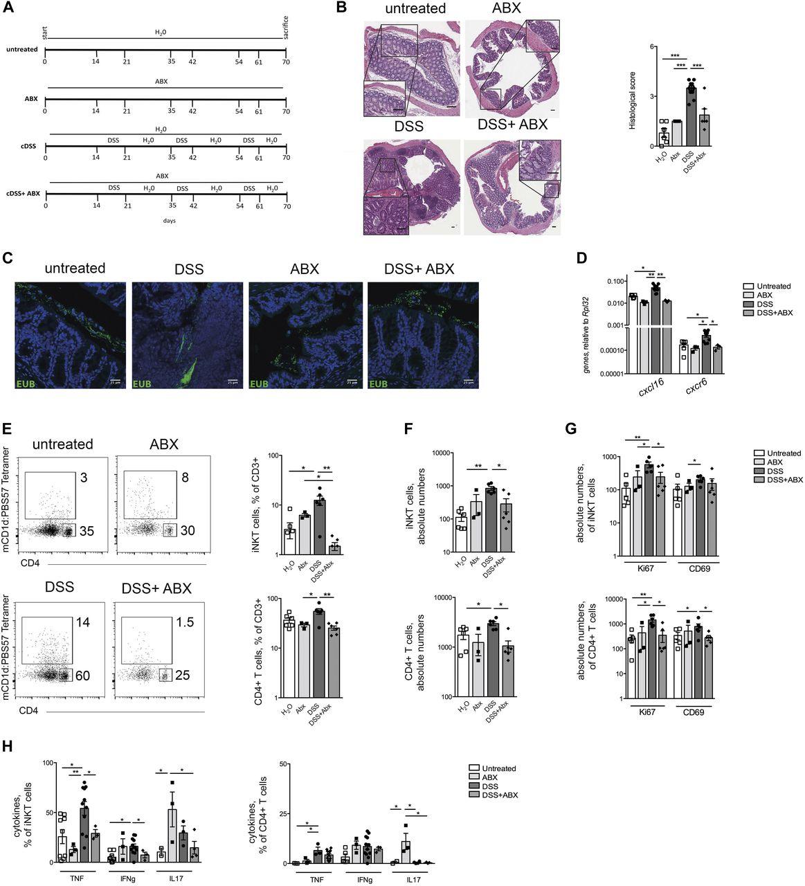 Mucosa-associated microbiota drives pathogenic functions in IBD