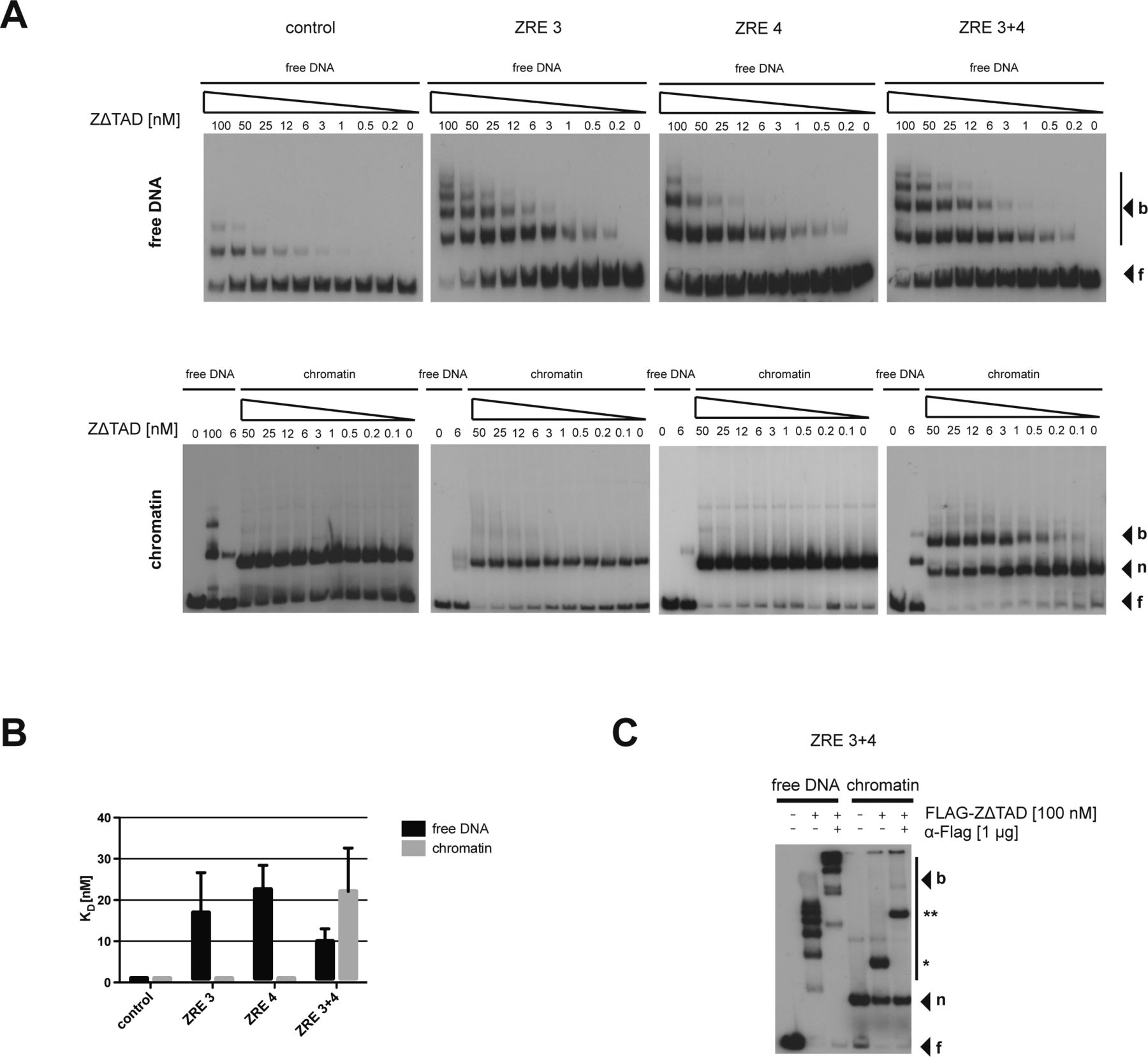 BZLF1 interacts with chromatin remodelers promoting escape