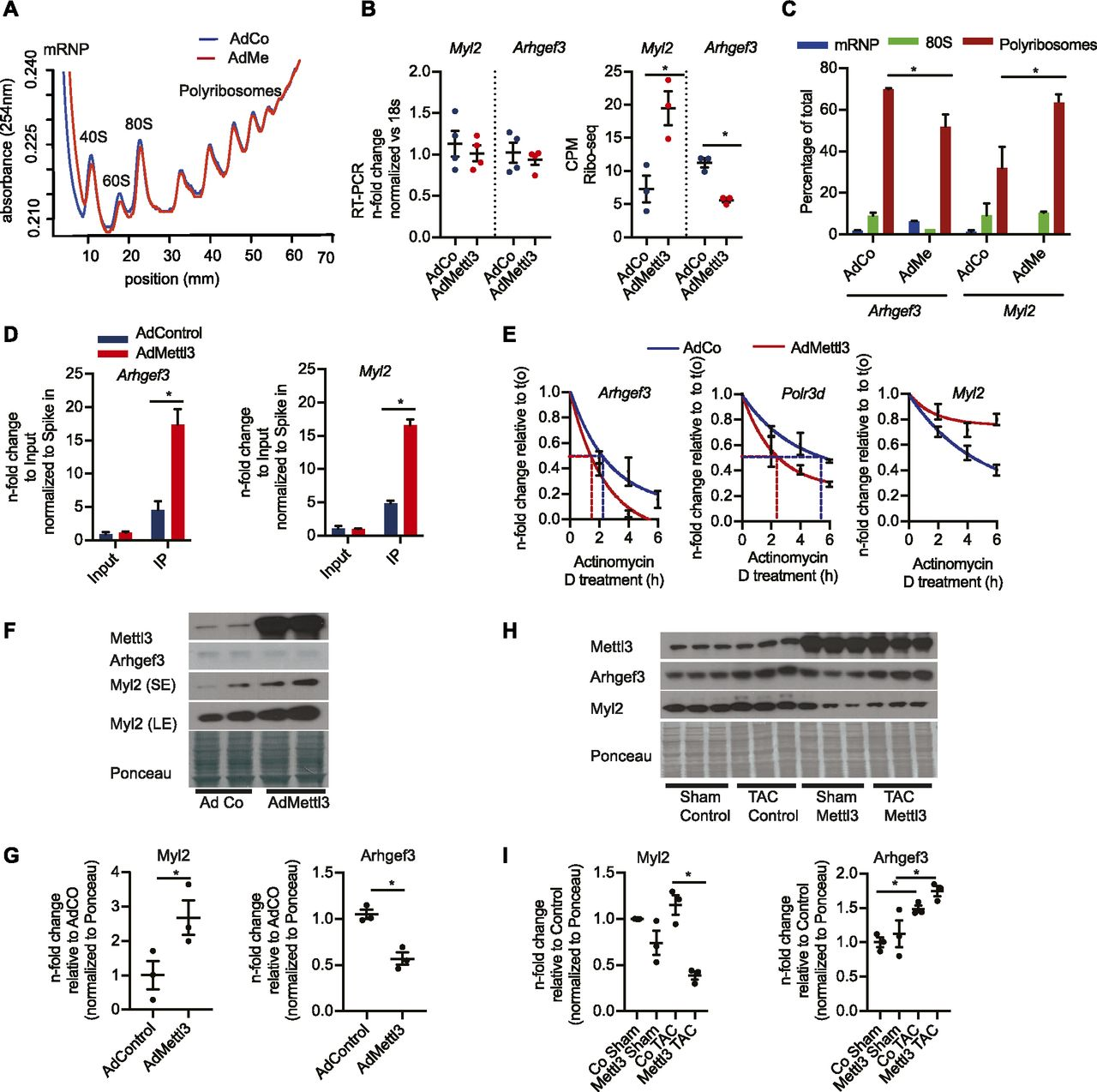 m6A-mRNA methylation regulates cardiac gene expression and cellular