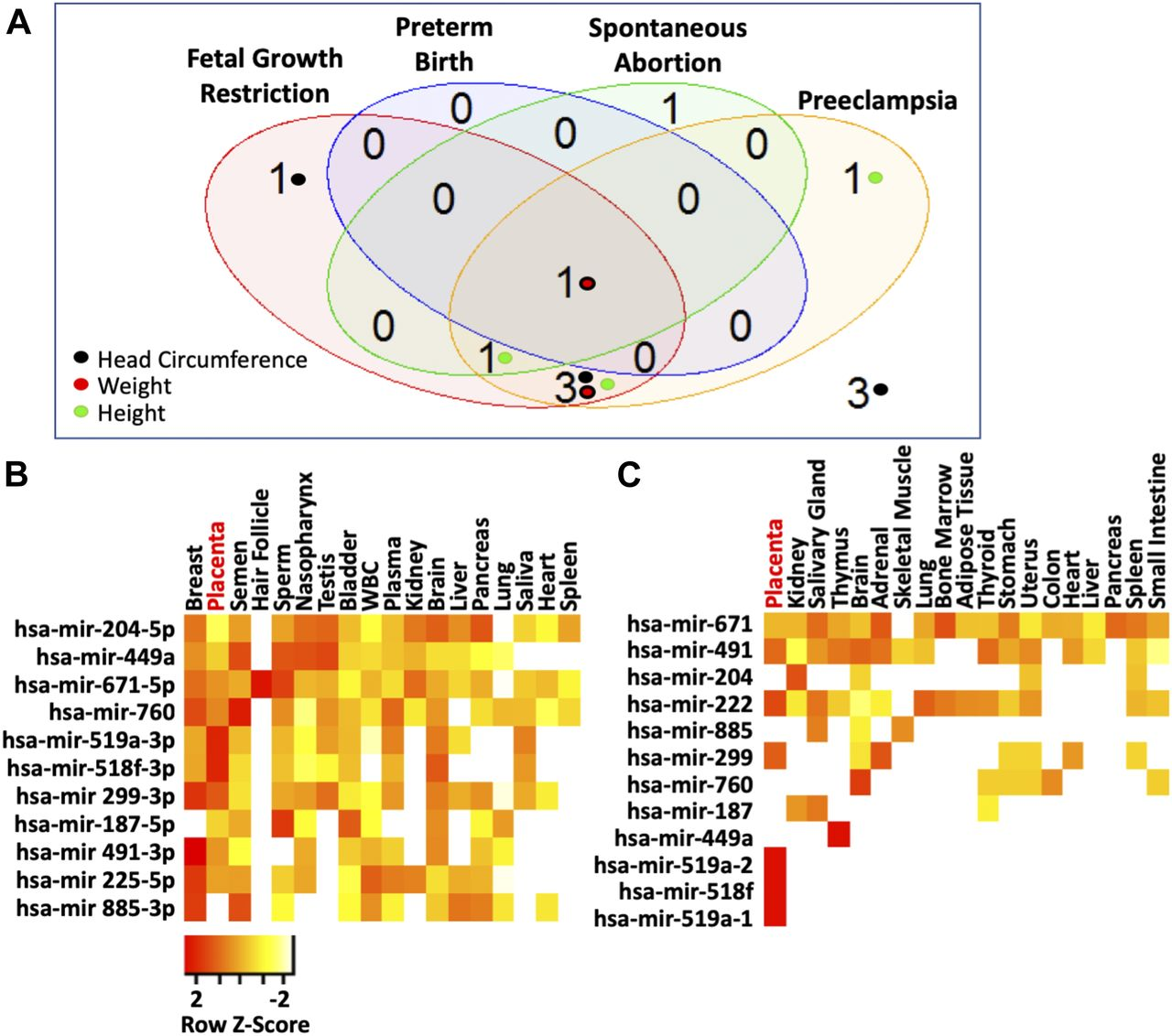 Maternal circulating miRNAs that predict infant FASD