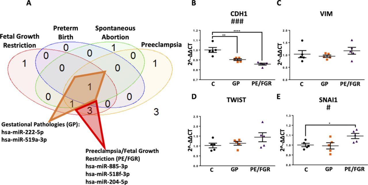 Maternal circulating miRNAs that predict infant FASD outcomes