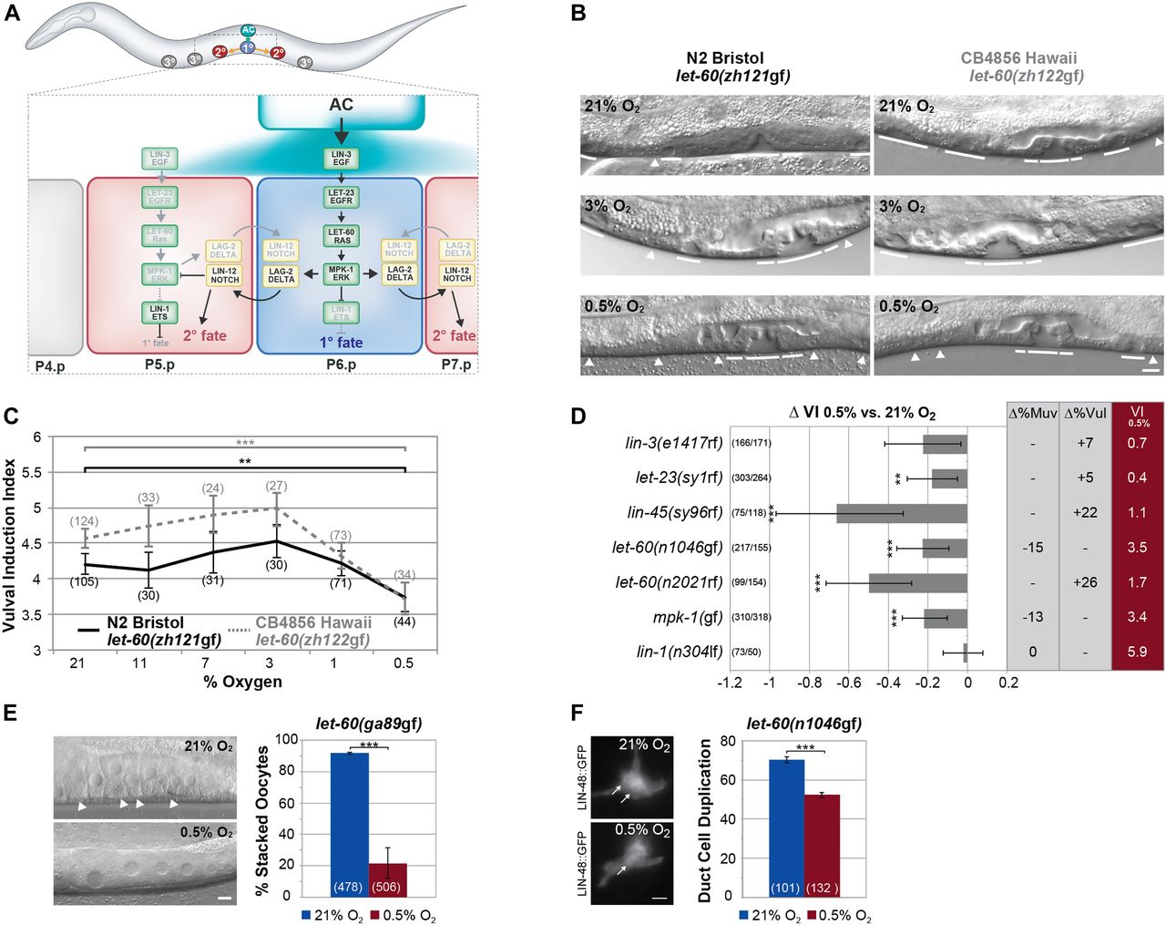 The hypoxia-response pathway modulates RAS/MAPK–mediated cell fate