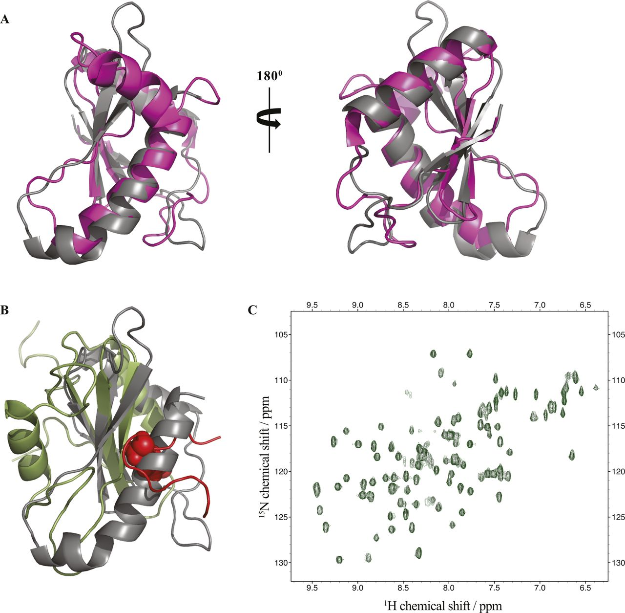 The S  Typhi effector StoD is an E3/E4 ubiquitin ligase which binds