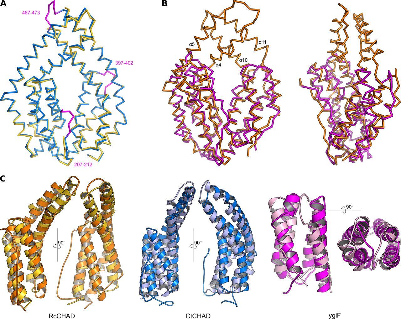 Molecular characterization of CHAD domains as inorganic