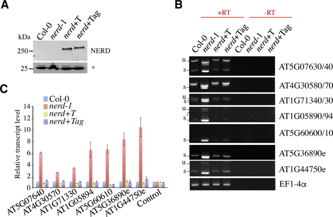 The m6A pathway protects the transcriptome integrity by restricting