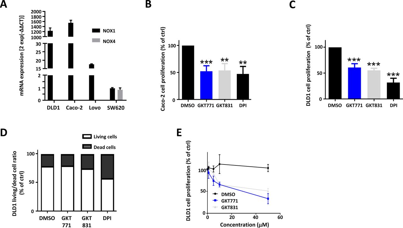 Inhibition of host NOX1 blocks tumor growth and enhances checkpoint
