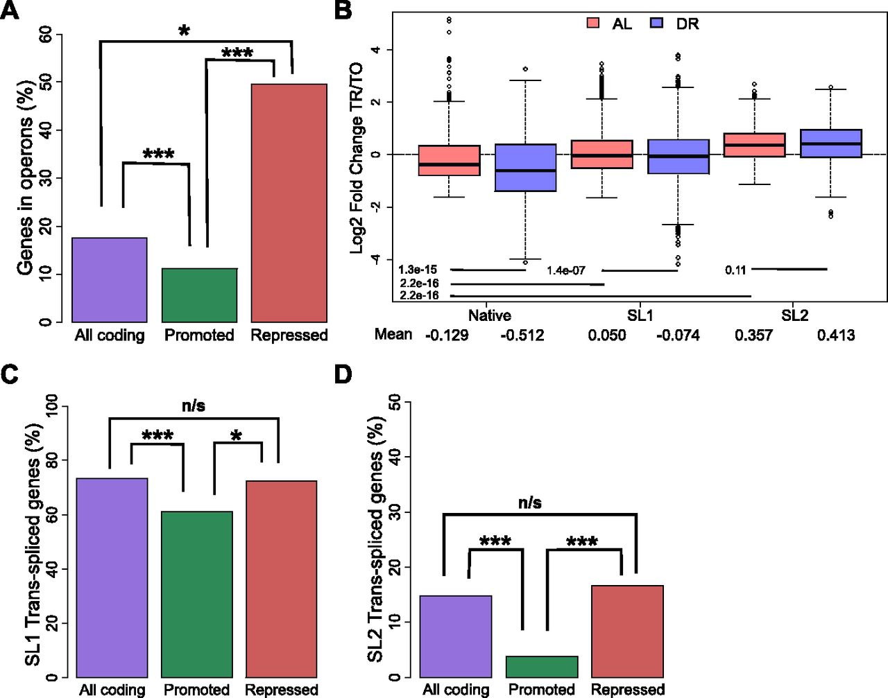 Dietary restriction induces posttranscriptional regulation