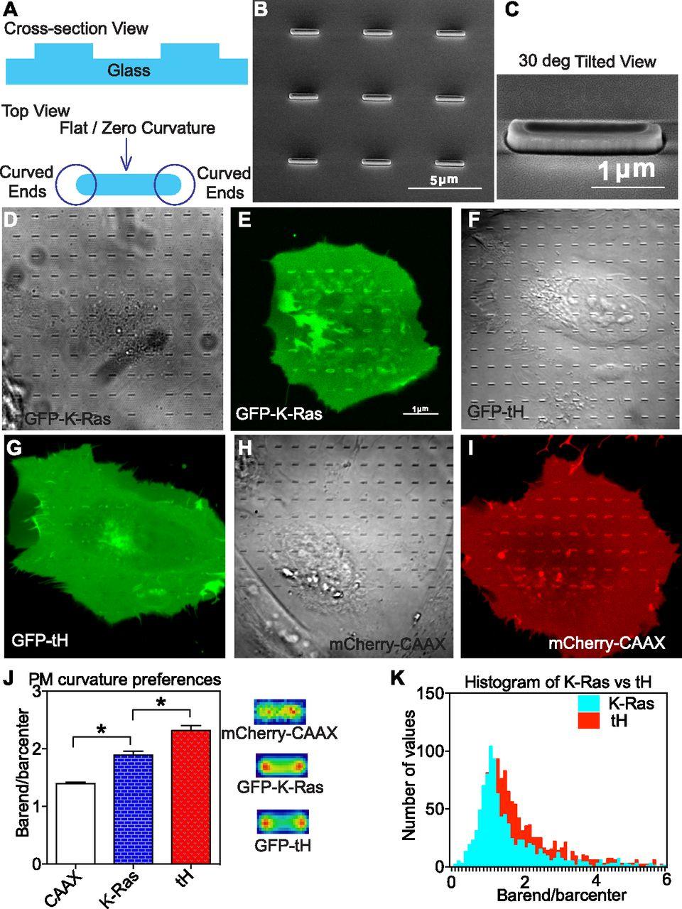 Membrane curvature sensing of the lipid-anchored K-Ras small