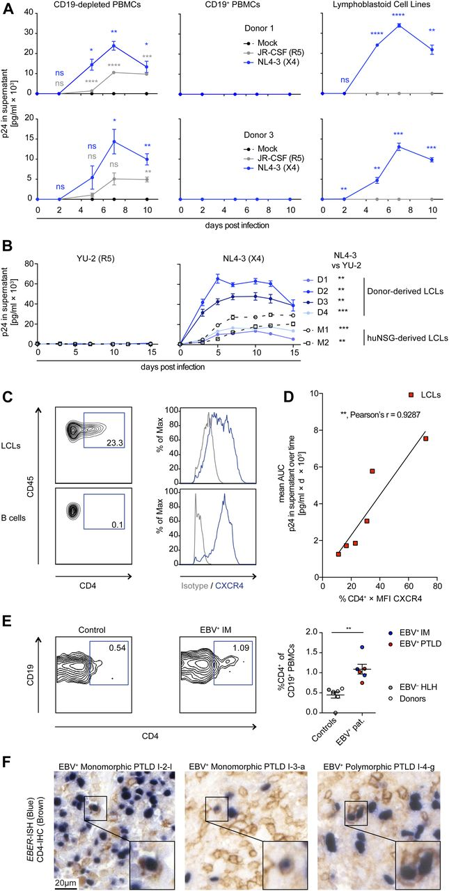 EBV Renders B Cells Susceptible To HIV-1 In Humanized Mice   Life Science  Alliance