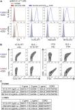 Development of a new monoclonal antibody specific to mouse Vγ6 chain