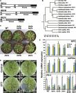 Unfolded protein-independent IRE1 activation contributes to multifaceted developmental processes in Arabidopsis