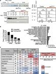 A role for condensin in mediating transcriptional adaptation to environmental stimuli