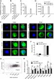 Kinesin-8B controls basal body function and flagellum formation and is key to malaria transmission
