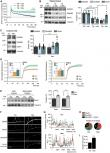 Sex-regulated gene dosage effect of PPARα on synaptic plasticity