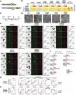 GATA transcription factors, SOX17 and TFAP2C, drive the human germ-cell specification program