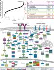 Quantitative proteomics identifies PTP1B as modulator of B cell antigen receptor signaling